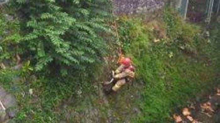 Petugas Damkar Berhasil Tangkap Ular Sanca Berukuran 3 Meter di Tepi Turap Kali Baru Jakarta Timur